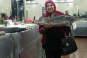شركة كندة تفتتح أول منفذ لبيع جميع انواع الأسماك البحرية والنيليه الطازجه بمحافظة سوهاج